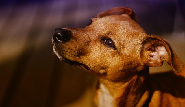 Hnedý pes na prechádzke.jpg